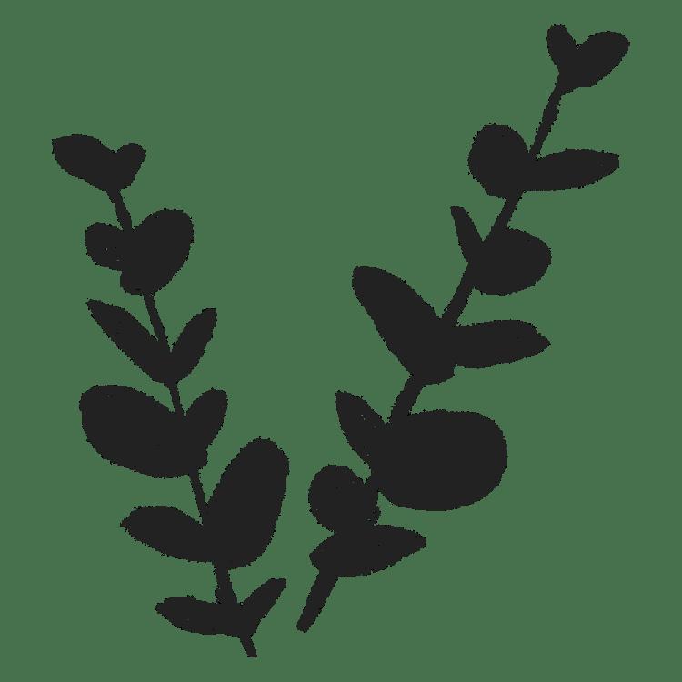 ユーカリの葉っぱのイラストフリー素材