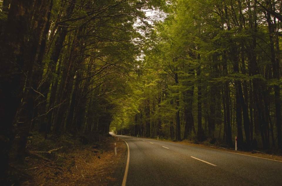forêt route voyage destination voyage tourisme vacances coaching organisation conseils accompagnement peurs
