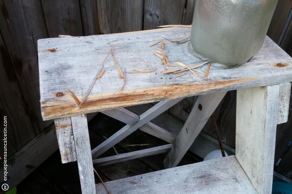 """Cuando digo que se comen las plantas """"y lo que pillen"""" me refiero a que hasta una escalera de madera que les pongas."""