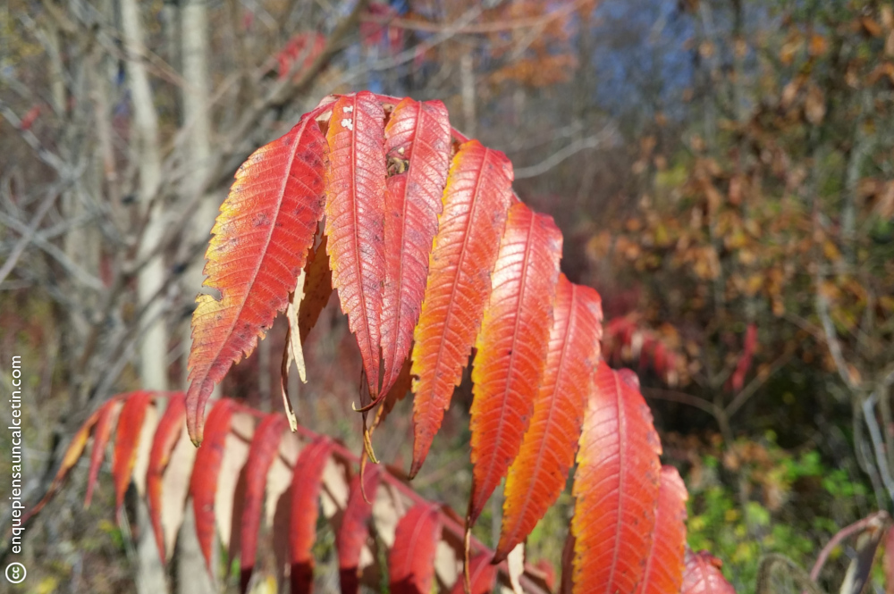 Ah, los colores del otoño canadiense...
