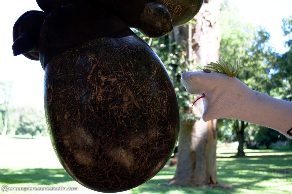 coco gigante