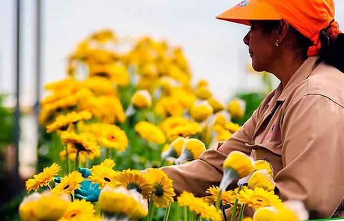 Colombia es el segundo exportador mundial de flores, luego de China. Foto: MinAgricultura.