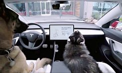 tesla-dog-mode-feature-1000x600