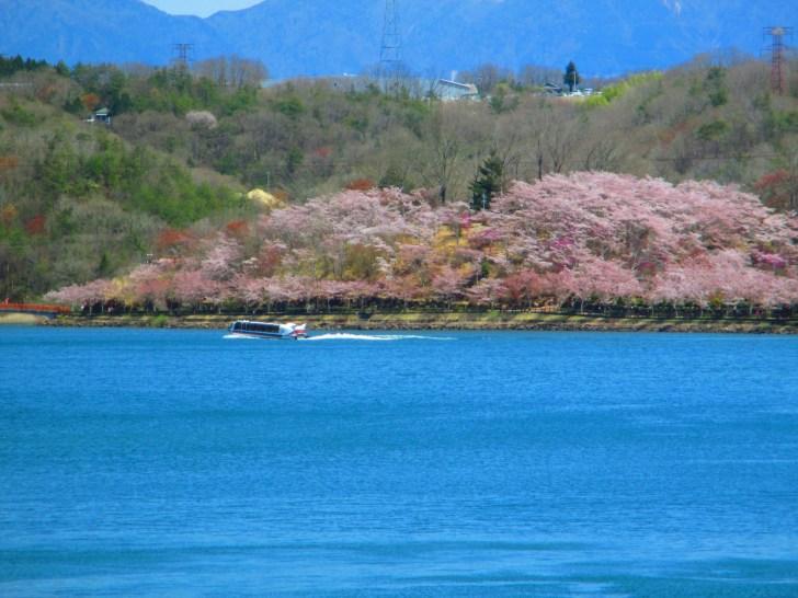 恵那峡 ジェット船と桜