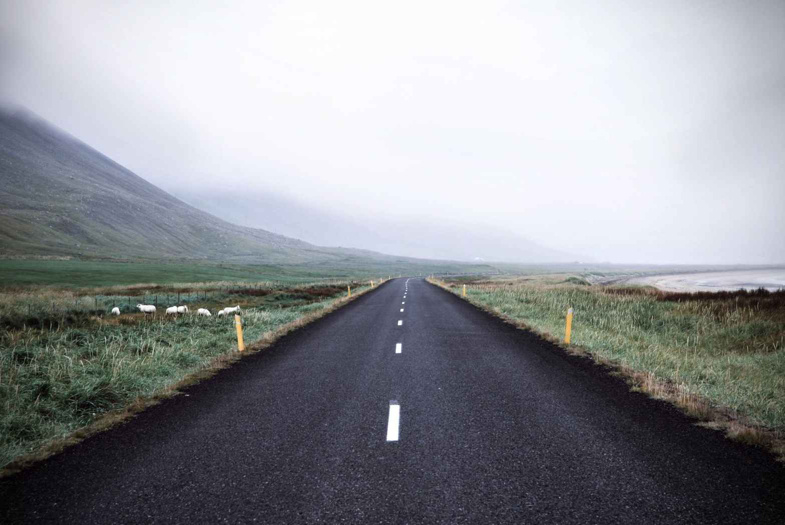 black asphalt road surrounded by green grass