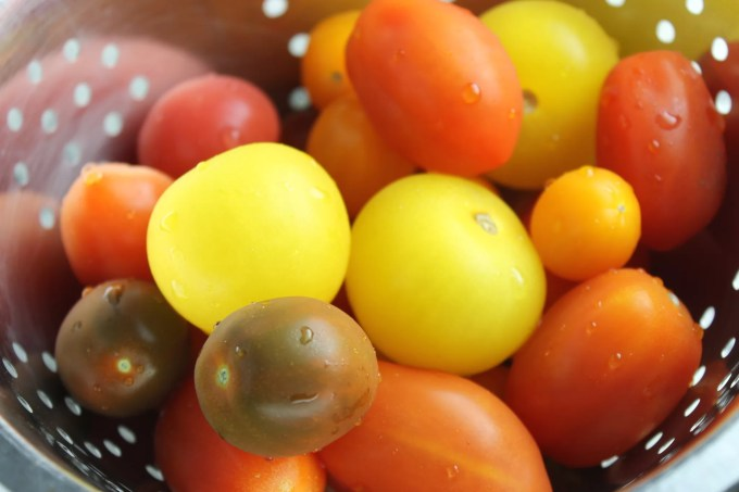 tomatoes, multicolor tomatoes