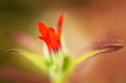 Flores y Texturas