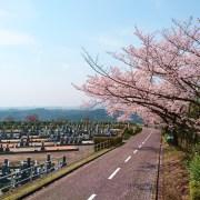 比叡山延暦寺大霊園桜風景写真
