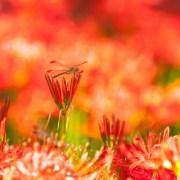 秋季彼岸会ヘッダー