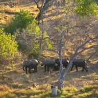Anger Rises Over Oil Drilling in Endangered Elephants' 'Last Stronghold'; ENS