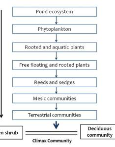 Image result for ecological succession flowchart also populations in ecosystems rh biologyaqaalevelnotesspot