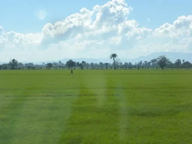 El verdor de una campo sembrado de arroz