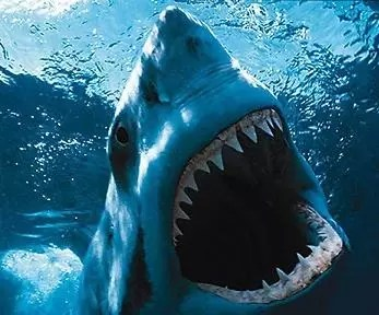 Un tercio de las especies de tiburón, al borde de la extinción por la caza