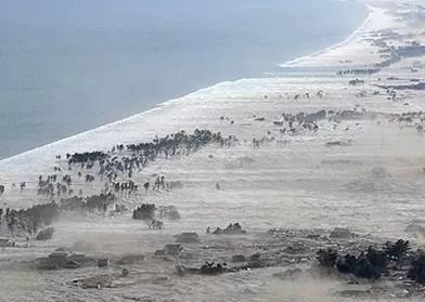 La cifra del día: La personas muertas por el Tsunami en Japón van por 11,000