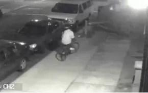 Cortan un árbol para robarse una bicicleta (video)