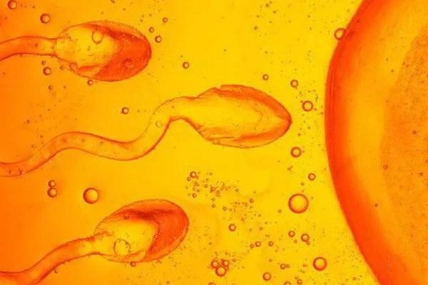 Donante de esperma gratuito en la mira de las autoridades norteamericanas