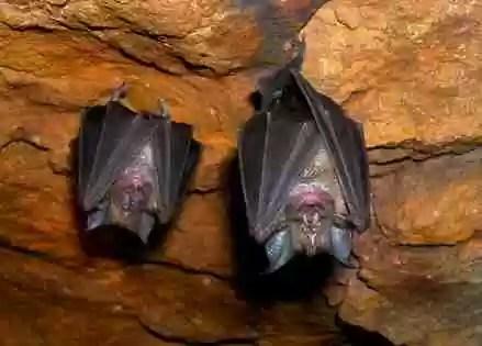 Ocho niños indígenas mueren en Ecuador mordidos por murciélagos con rabia