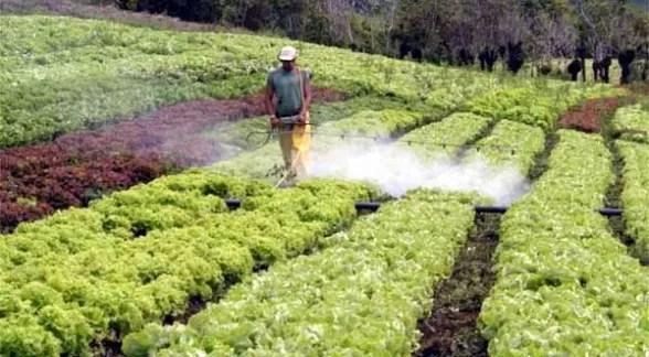 Prohíben uso de 22 plaguicidasen RD  para cumplir con estándares internacionales de calidad