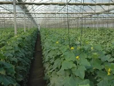 República Dominicana dispondrá este año de 6.6 millones de metros cuadrados para instalar invernaderos