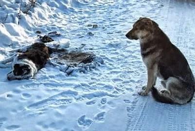 Conmovedora historia de amor de un perro