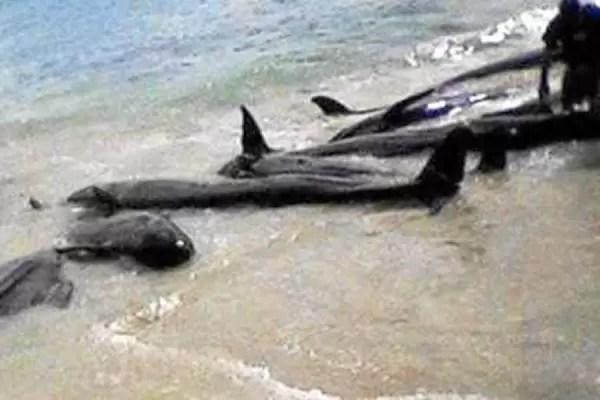 Un virus mata a más de mil delfines en 2013 en la costa este de EE.UU.