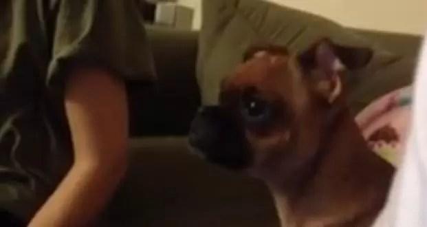 Perro se emociona y llora mirando El Rey León (video)