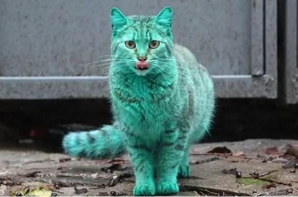 Estudio dice que los gatos probablemente quieran matarnos