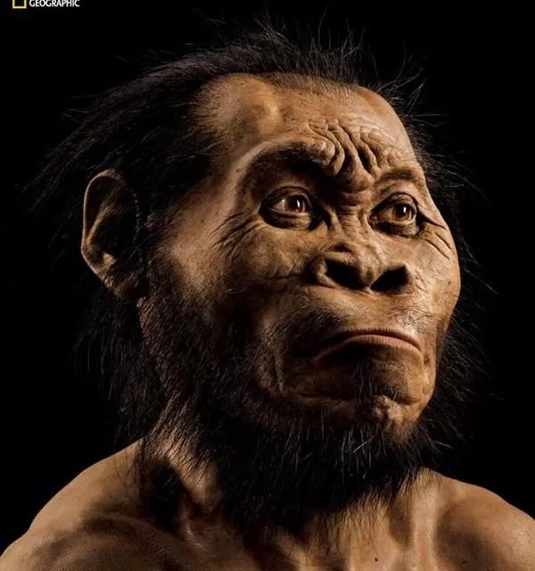 Descubierta en Sudáfrica una nueva especie que cuestiona nuestro árbol evolutivo