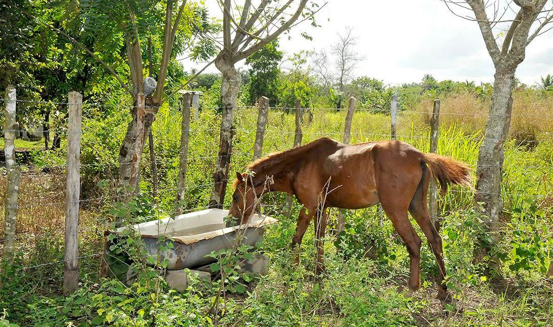 Apresan  tres hombres que mataban caballos para vender carne como si fuera res