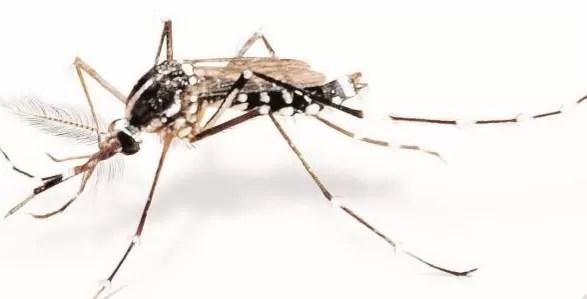 EEUU extremadamente preocupado por impacto de zika en Haití