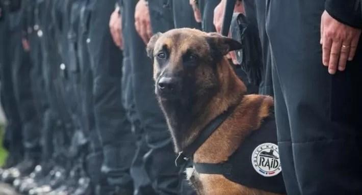 perra policia