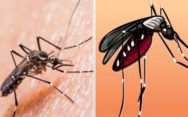 Colombia reporta más de 47.700 casos de zika, 8.890 embarazadas