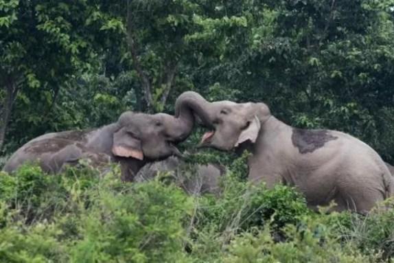 Dos elefantes (AFP/Archivos | Diptendu Dutta