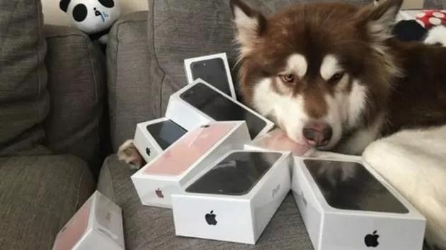 perro-iphone-regalo-consentido