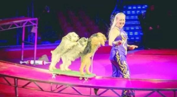 perros-circo