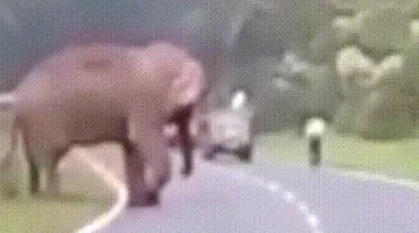 Selfie mortal en la India: un elefante asesinó a un hombre que se le acercó demasiado