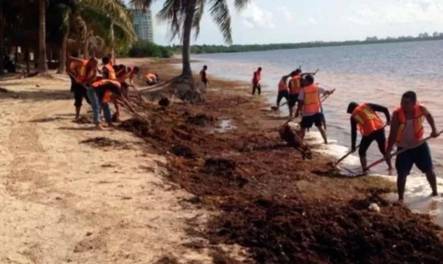 Analizarán las oportunidades del sargazo para la República Dominicana