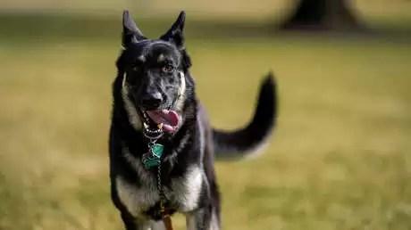 Un perro de Biden muerde a un segundo empleado de la Casa Blanca en un mes