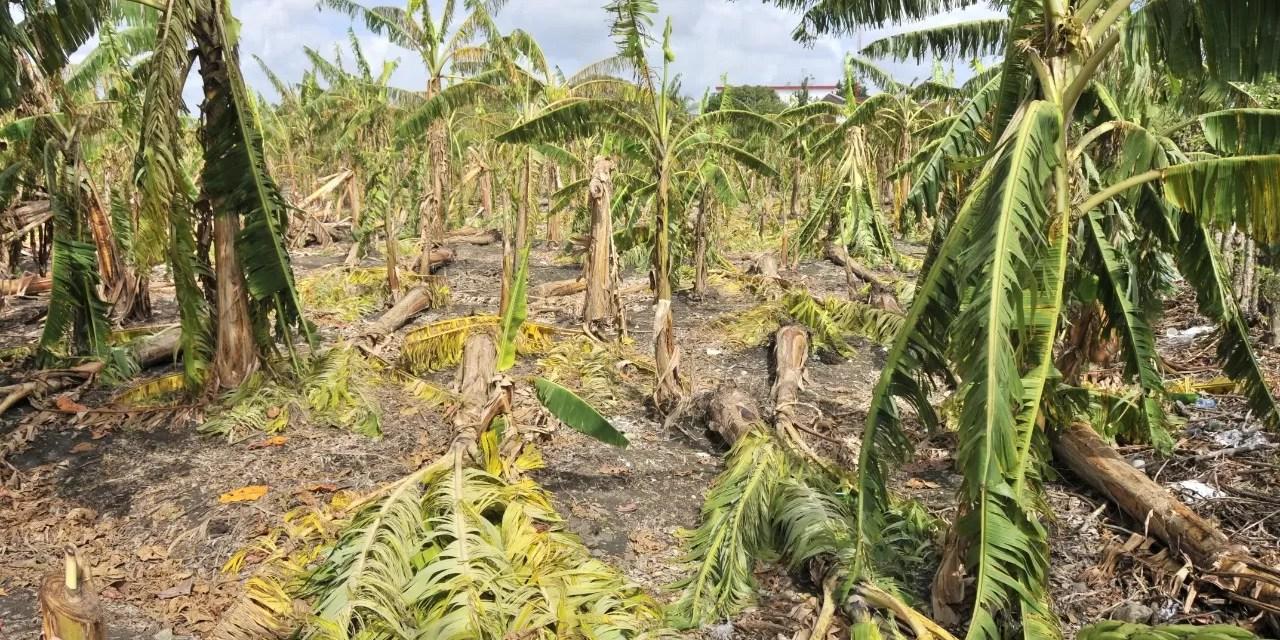 Gobierno auxiliará productores afectados por granizada y tornado en Moca y La Vega