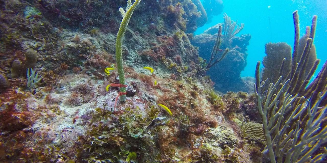 El 14% del coral en el mundo desapareció entre 2009 y 2018