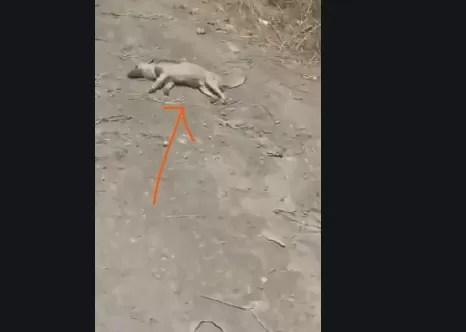 Video – Envenenan más de 8 perros en Puerto Plata