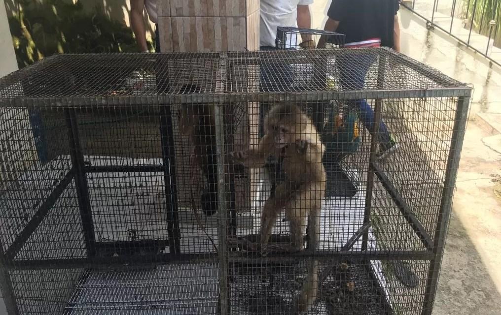 Arrestan dos personas por introducción y explotación de animales exóticos en Punta Cana