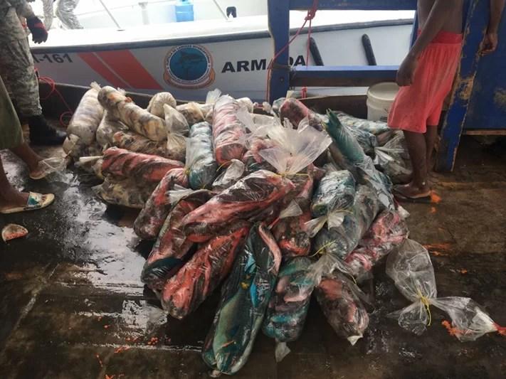 Decomisan 623 libras de lambí y 806 libras de peces loro