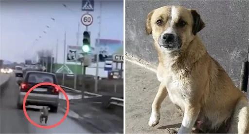 ¿Por qué tu perro te sigue a todas partes?
