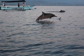 Conseil de dauphin