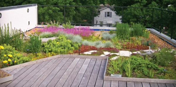 landscaping sustainability