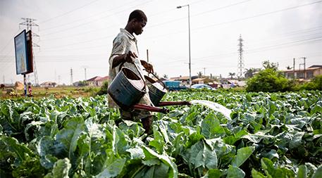 Urban farming in Ghana