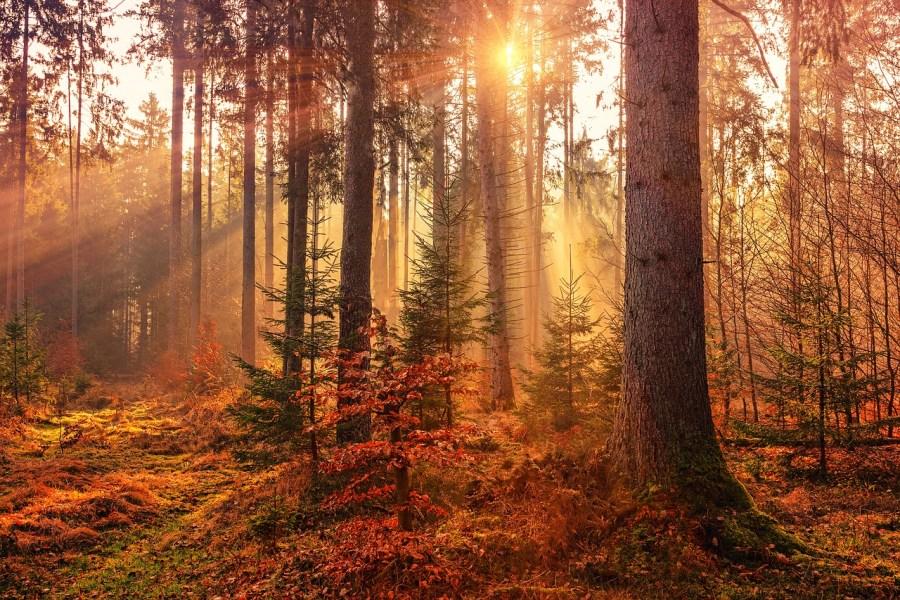 autumn-3295747_1280