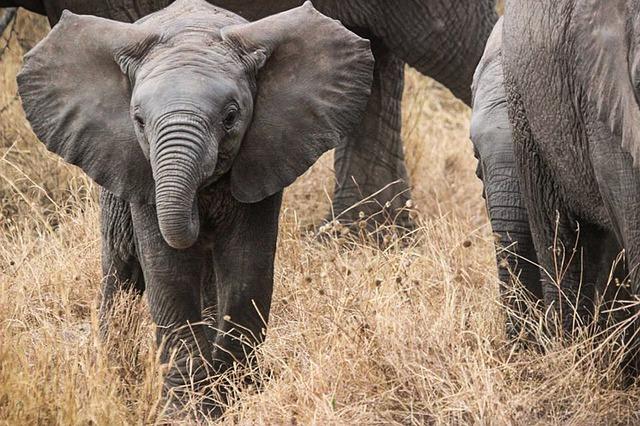 Insting Hewan Memperkirakan becana alam