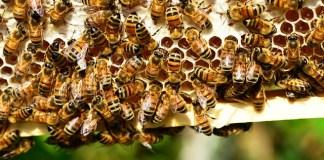 Manfaat Bee Pollen